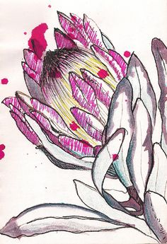 I love the open pen work of this flower with the bright scribble like shading on parts of the flower head Botanical Art, Botanical Illustration, Illustration Art, Protea Art, Nature Sketch, Flower Sketches, Art Sketchbook, Fabric Painting, Flower Art
