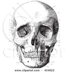 vintage black and white anatomical sketch of a human skull 11