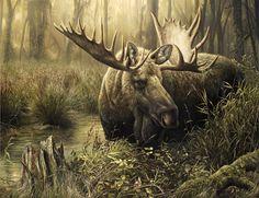moose wallpaper - Google Search
