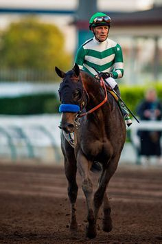 Get to know 2016 Kentucky Derby hopeful and 2015 Los Alamitos Futurity winner Mor Spirit!