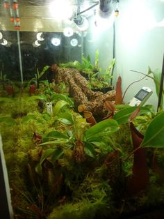 http://www.cpukforum.com/forum/index.php?/topic/43823-terrarium-from-old-aquarium/