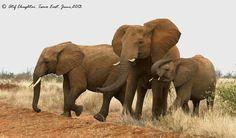 Elephant Day 2013 - Tsavo, Kenya