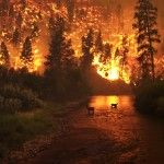 Nature in danger: Deforestation climbs high