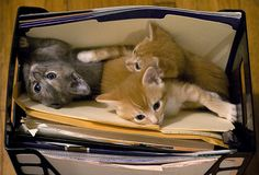 I would like to open up a file drawer and find kittens inside.