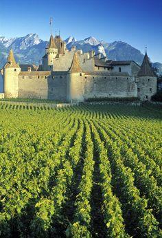 Vineyard - Geneva, Switzerland