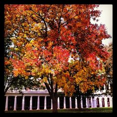 #UVa it's too bad this tree doesn't cover every color in the spectrum ;)