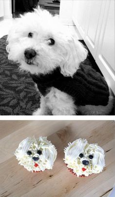 Bichon frise cupcake for Terry the dog    Next year, we will do this for Muff...