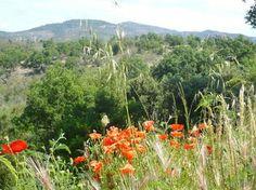 Fordybelse og yoga i Provence   Juni 2014   Munonne - Din spiritelle rejse portal - Vælg mellem 31. maj - 7. juni eller 7. - 14. juni 2014 eller tag begge uger i træk.  - Munonne