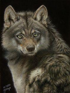 Fierce?  Wolf.   Pastel painting
