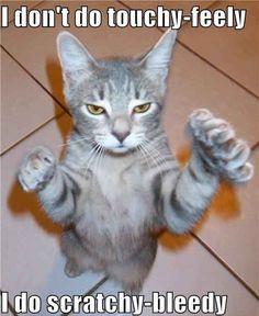 lol a new grumpy cat I love him Funny Animal Memes, Animal Quotes, Cute Funny Animals, Funny Animal Pictures, Funny Cute, Cute Cats, Funny Pics, Cat Quotes, Funny Memes For Kids