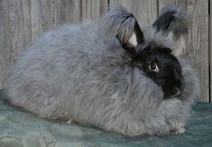 Black German Angora Rabbit Wool Spinning Felting fiber 100% Angora Prime Fiber Bunny Wool