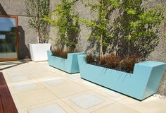 Turquoise planters with Ginkgo trees and red grasses