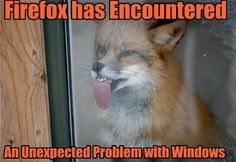 EVERYTHING encounters a problem with windows...    ...but this is Funny!