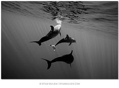 Takes me back to swimming with wild dolphins near the beach in Hawaii :)
