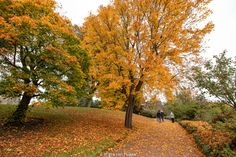 Dove vedere il fogliage a Edimburgo: Royal Botanic Gardens Autumn, Fall, Country Roads, Edinburgh, Fotografia
