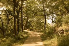 Wooded path 2
