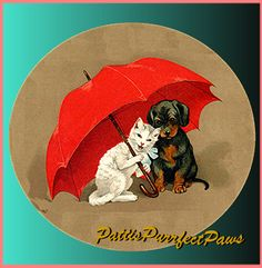 It's raining cats & dogs.... by Michael Carty on Etsy