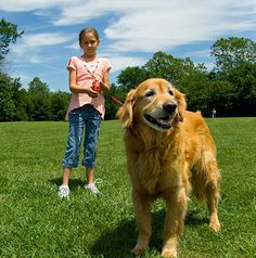 What to do when your child is afraid of dogs