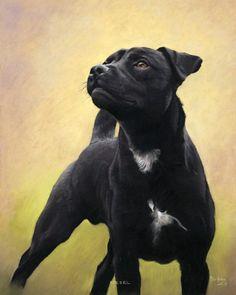 DOG PORTRAIT GALLERY 2
