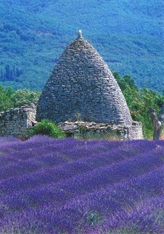 Lavender field in Provence     #travel #places #France