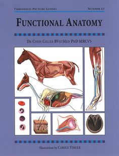 Threshold Picture Guide No. 43 Functional Anatomy by Dr Chris Colles | Quiller Publishing. A guide to the horse's anatomy and basic physiology, with clear descriptions of how it works. Written for horse owners and students by a leading equine veterinary surgeon. #horse #pony #skeleton #anatomy #physiology