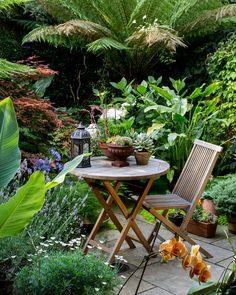 Most Creative Gardening Design Ideas - New ideas Small Tropical Gardens, Small Courtyard Gardens, Back Gardens, Small Gardens, Outdoor Gardens, Tropical Patio, Small Courtyards, Modern Gardens, Tropical Landscaping