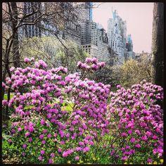 Central Park in Spring Photo by shonasss via Instagram