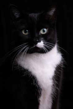 E Pluribus Feline - In Cats We Trust