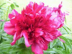 Flowers #pretty #bright #makesmehappy