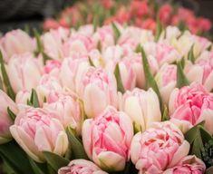 Pastel, Rose, Spring, Flowers, Plants, Cake, Pink, Plant, Roses