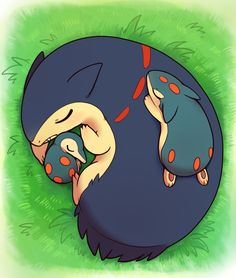 Cyndaquil, Quilava and Typhlosion