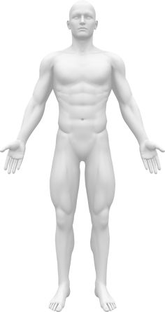 Illustration about Human body - Blank Anatomy Figure - Front view. Illustration of body, anatomy, object - 30057883 Fitness Diet, Health Fitness, Body Template, Social Media Graphics, Human Body, Anatomy, Health Care, Massage, Exercise