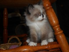 Bailey's kittens are now 9 wks.old. July,2014