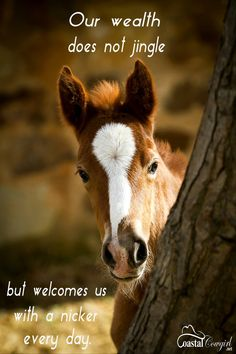 Thought For The Day « Heart of a Horse