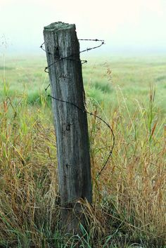 Old Fence Post With Barbed Wire.Agriculture Barb Wire Fence A Barbed Wire Fence And Old . Old Fence Post Free Stock Photo Public Domain Pictures. Dog Fence, Front Yard Fence, Farm Fence, Pallet Fence, Barbed Wire Fencing, Timber Fencing, Metal Fence, Cedar Fence Posts, Wooden Fence Posts