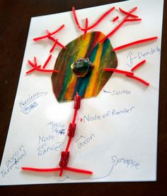 A school of fish: Neuron Models with licorice and fruit leather, and Neural Connections drawing Neuron Model, Neuron Structure, Neural Connections, Sad Faces, Brain Activities, Teaching Tools, Early Childhood, Candy, Fruit