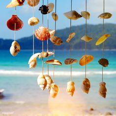 Sea shells on a sea shore | premium image by rawpixel.com