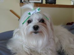 St. Patrick's ready