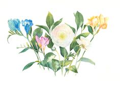 Watercolor bouquet with Ranunculus and Freesia on Behance
