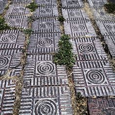 Love these bricks in Albany!