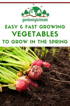 Fast & Easy To Grow Vegetables For The Spring Garden - In the spring fresh vegetables from the garden can be scarce. Here are 7 fast and easy to grow vege - Fast Growing Vegetables, Home Grown Vegetables, Fresh Vegetables, Gardening For Beginners, Gardening Tips, Grow Your Own Food, Grow Food, Vegetable Garden Tips, Natural Parenting