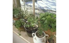 Enjoy fresh herbs all winter long with our expert tips.