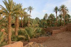 Wanderung in den Oasen von Zagora, Marokko Desert Oasis, Plants, Morocco, Mountains, Hiking, Nature, Viajes, Planters, Plant