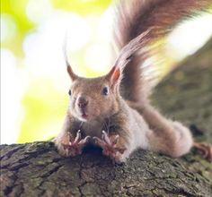 Forest Animals, Woodland Animals, Happy Squirrel, Squirrel Pictures, Racoon, Woodland Creatures, Chipmunks, Vegan Life, Beautiful Creatures
