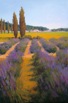Lavender Harvest by Susan Ogilvie Pastel ~ 36 x 24 Pastel Landscape, Abstract Landscape, Landscape Paintings, Watercolor Trees, Watercolor Paintings, Lavendar Painting, Tableau Pop Art, Art Moderne, Pastel Art