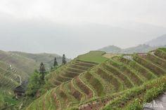 Dragon Backbone's Rice Terraces   #China #Guilin #nature