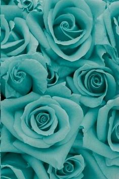 Inspired By: Tiffany Blue #colour #flowers #design