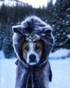 Some Helpful Ideas For Training Your Dog. Loving your dog does not mean you are willing to let him go hog wild on your possessions. That said, your dog doesn't feel the same way. Cute Cats And Dogs, Cute Dogs And Puppies, Cats And Kittens, Cute Baby Animals, Animals And Pets, Funny Animals, Adventure Cat, Dog Travel, Animals Beautiful