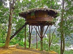 www.rainforest.in/accommodation-tree-house.html