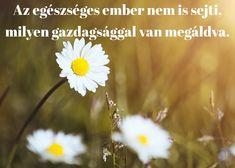 idézet a természetről Dandelion, Motivational Quotes, Words, Plants, Life, Posters, Dandelions, Motivating Quotes, Poster
